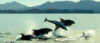 دلفین ها هم اِسم دارند